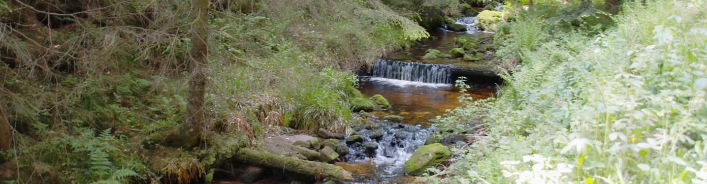 Natur Alsbachtal