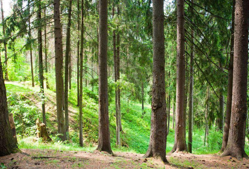 Wald Schwarzwald